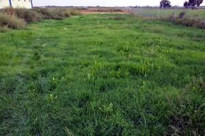 newly pasture