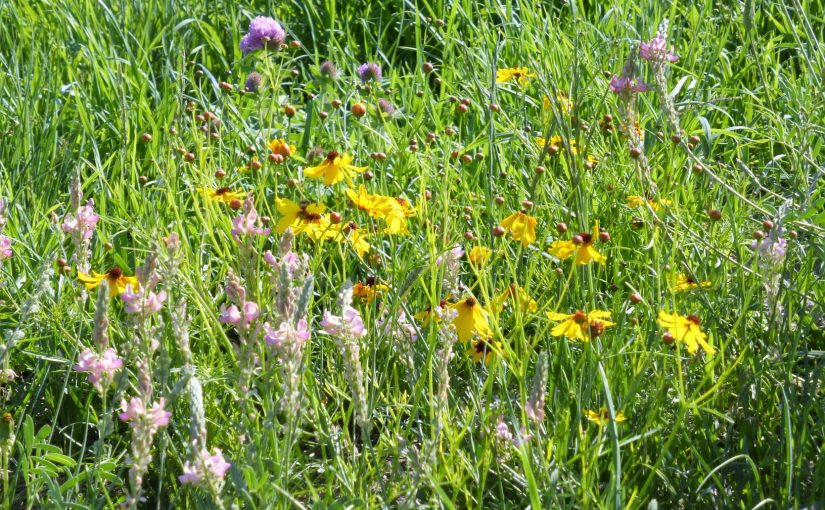 Building a Healthy and Diverse Pasture