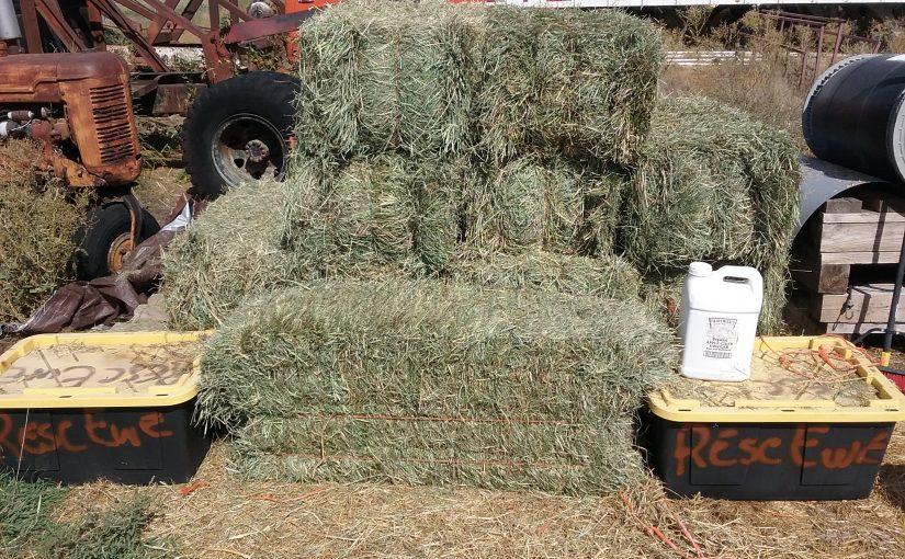 Generosity in the Form of Hay
