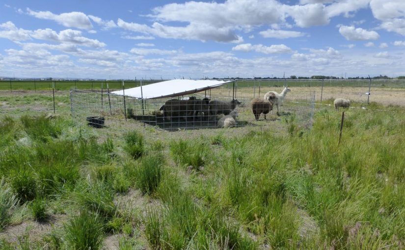 Food, Donors, Volunteers, New Friends and a New Pasture